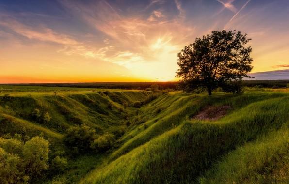 Картинка поле, лето, небо, природа, дерево, рассвет, Алексей Малыгин