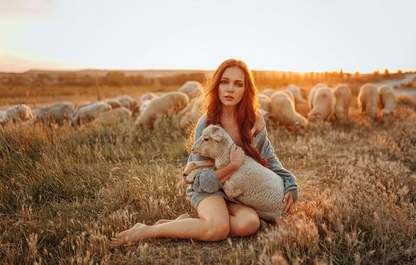 Картинка поле, животные, небо, взгляд, девушка, солнце, природа, поза, модель, овцы, босиком, макияж, прическа, рыжая, ножки, …