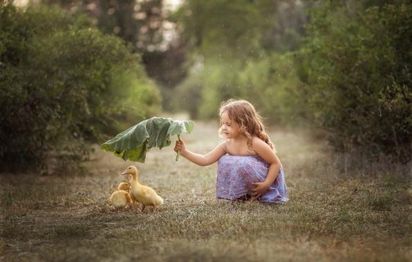 Картинка лист, дождь, девочка, птенцы, гусята, лапух