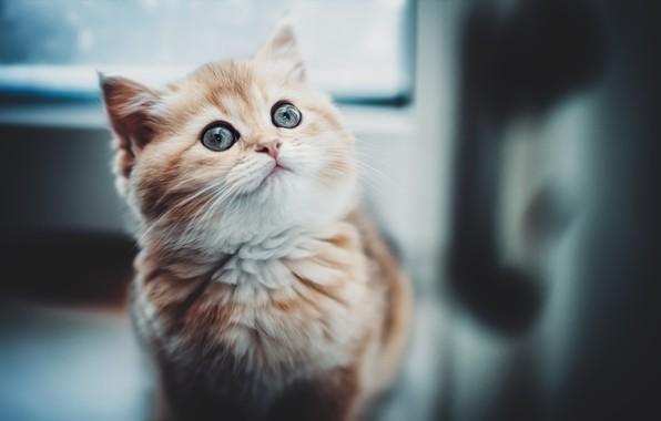 Картинка малыш, рыжий, котёнок