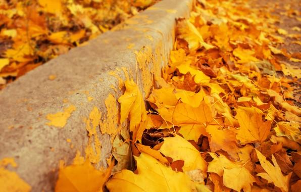 Картинка осень, листья, фон, желтые, colorful, клен, yellow, background, autumn, leaves, осенние, maple