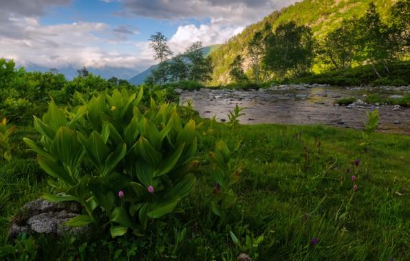 Картинка лето, небо, облака, деревья, пейзаж, горы, природа, река, камни, растительность, берега, Александр Плеханов