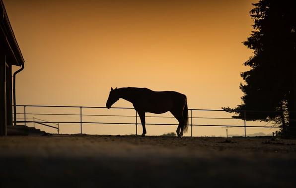 Картинка природа, конь, вечер