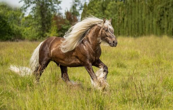 Картинка поле, лето, конь