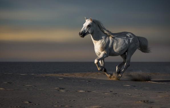 Картинка море, конь, берег
