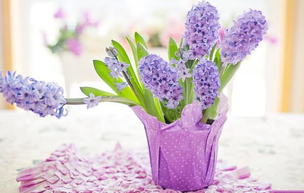 Картинка цветы, букет, Пасха, гиацинт