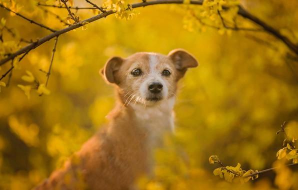 Картинка взгляд, морда, ветки, фон, собака