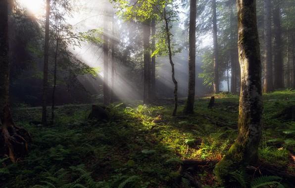 Картинка лес, лето, свет, утро
