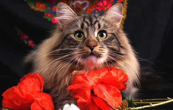 Картинка кошка, глаза, кот, взгляд, морда, цветы, серый, фон, портрет, красные, полосатый, платок, искусственные