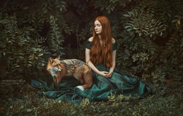 Картинка девушка, поза, платье, лиса, рыжая, рыжеволосая, кусты, длинные волосы, Marketa Novak, Zuzana Olejnik