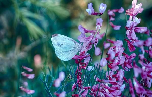 Картинка трава, макро, цветы, природа, бабочка, Mustafa Öztürk