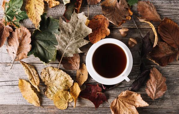 Картинка осень, листья, кофе, чашка, wood, autumn, leaves, cup, romantic, coffee, осенние