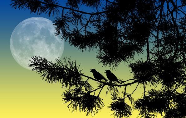 Картинка птицы, ночь, ветки, луна, силуэты
