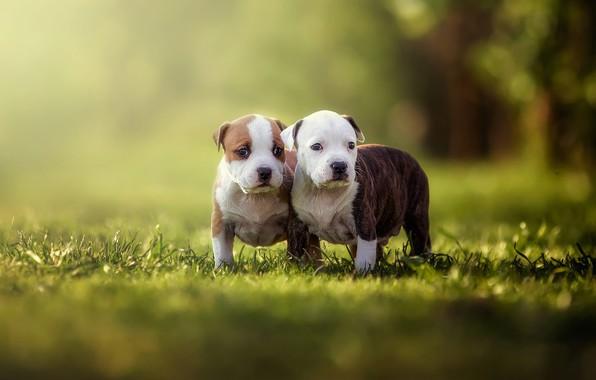 Картинка зелень, собаки, лето, трава, взгляд, свет, природа, поза, зеленый, блики, парк, фон, настроение, вместе, поляна, …