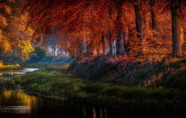 Картинка осень, трава, деревья, природа, пруд, парк, водоём, Голландия, Jan-Herman Visser