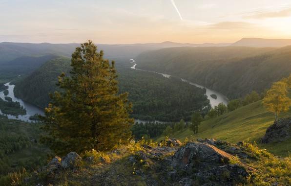 Картинка осень, деревья, пейзаж, горы, природа, река, камни, дерево, вечер, леса, сосна, перевал, Красноярский край, Мана