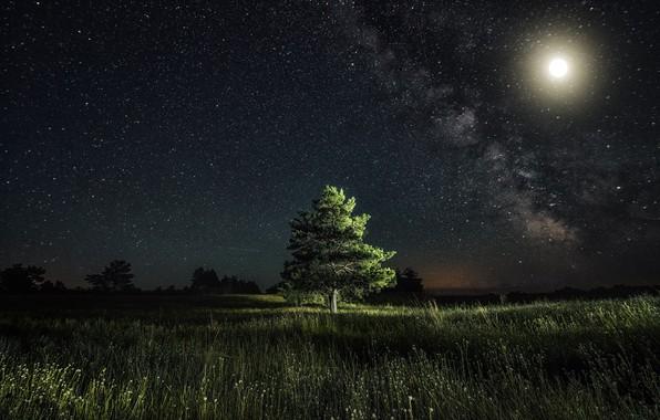 Картинка звезды, свет, ночь, луна, сосна