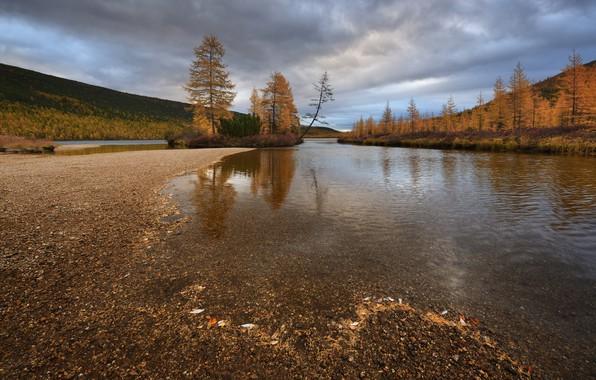 Картинка осень, деревья, природа, Колыма, ручей Неведомый, Максим Евдокимов