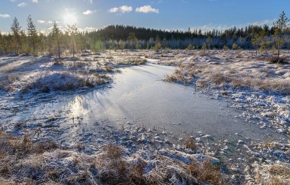 Картинка forest, winter, lake, finland, frouzen