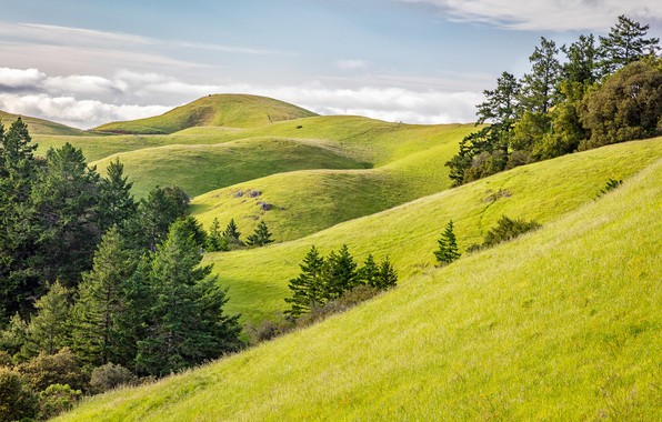 Картинка United States, California, Stinson Beach, Mount Tamalpais State Park, Rolling Green