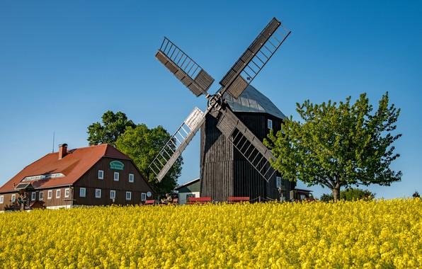Картинка поле, небо, солнце, деревья, дом, Германия, мельница, скамейки, рапс, Saxony