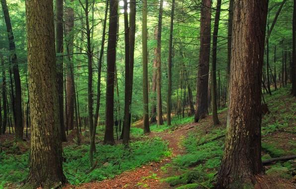 Картинка Природа, Тропинка, Деревья, Лес, Папоротник