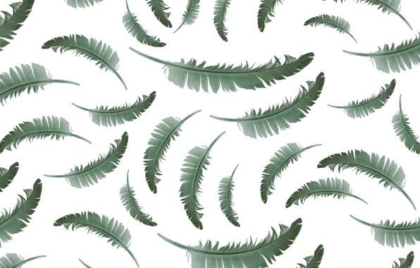 Картинка перо, текстура, белый фон, background, pattern, feather