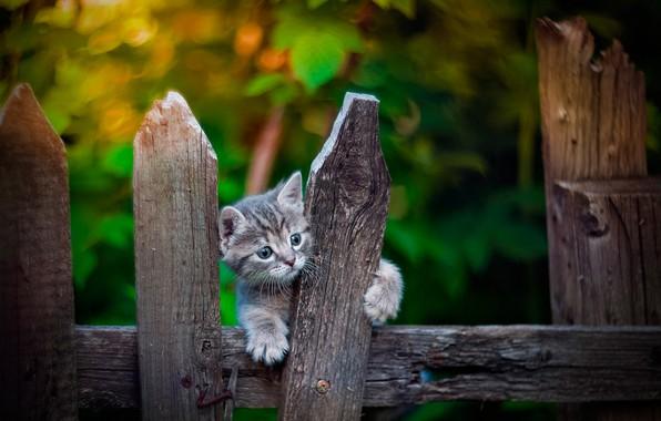 Картинка забор, малыш, котёнок