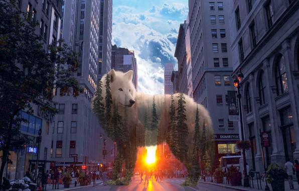 Картинка лес, город, волк, дух