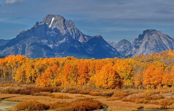 Картинка осень, лес, небо, трава, солнце, облака, деревья, горы, скалы, США, кусты, жёлтые, Grand Teton National …