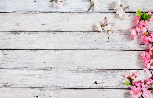 Картинка цветы, ветки, весна, цветение, wood, pink, blossom, flowers, spring, bloom