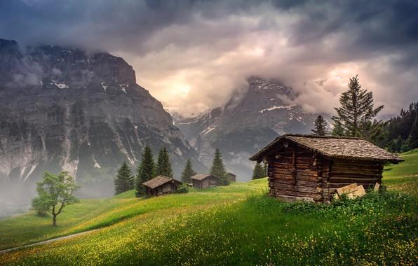 Картинка поле, лес, лето, небо, трава, облака, свет, цветы, горы, природа, туман, дерево, скалы, холмы, склоны, …