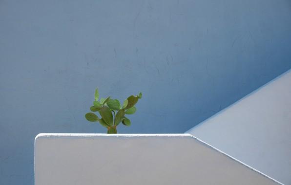 Картинка стена, кактус, wall, cactus