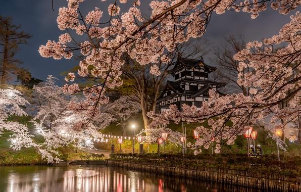 Картинка деревья, ветки, природа, город, пруд, парк, весна, вечер, Япония, сакура, освещение, фонари, храм, пагода, аллея, …
