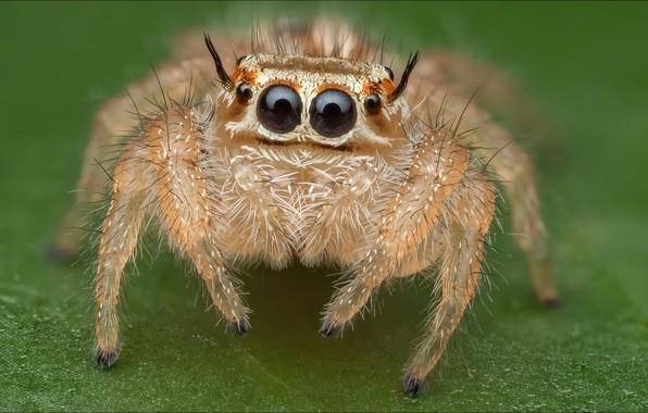 Картинка паук, spider, alien, eyes