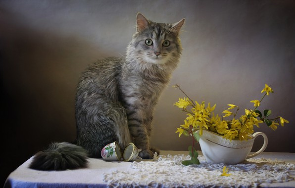 Картинка кот, ветки, стол, животное, шкатулка, салфетка, Ковалёва Светлана, Светлана Ковалёва