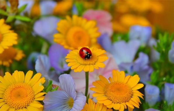 Картинка Цветы, Божья коровка, Flowers