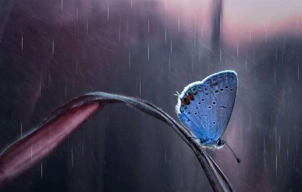 Картинка капли, природа, дождь, Бабочка