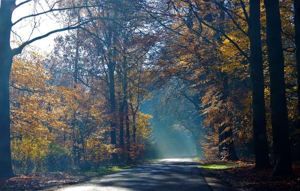 Картинка дорога, осень, туман, утро в лесу