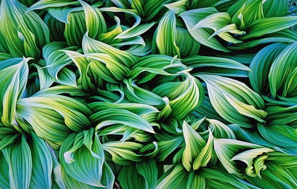 Картинка листья, абстракция, рендеринг, фон, рисунок, растения, холст, репродукция работы Кристофера Беркета, оттенки зеленого цвета