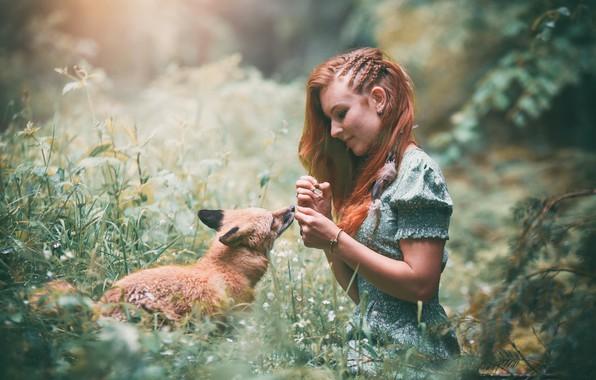Картинка девушка, природа, лиса