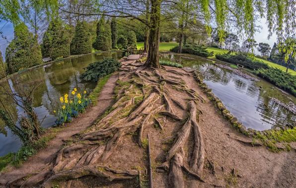 Картинка пейзаж, природа, озеро, дерево, красота, брёвна