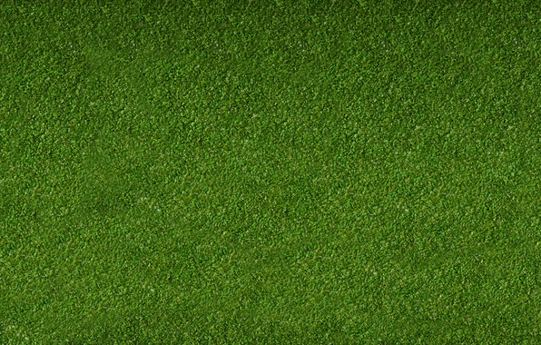 Картинка Зелень, Трава, Газон