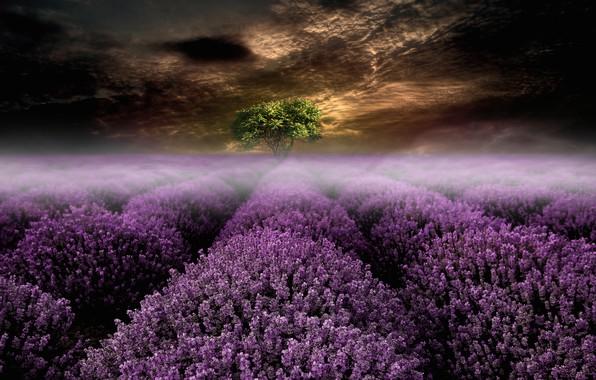 Картинка поле, лето, небо, пейзаж, цветы, ночь, тучи, природа, туман, рендеринг, дерево, коллаж, обработка, арт, сумерки, …