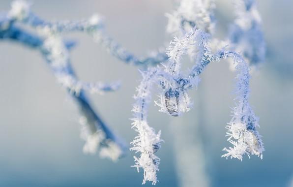 Картинка зима, иней, макро, природа, ветка, мороз