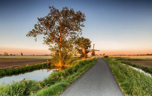 Картинка дорога, деревья, мельницы, Нидерланды, Alblasserwaard
