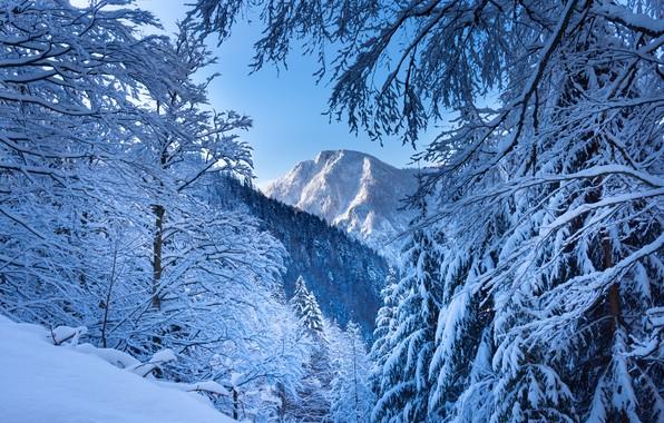 Картинка зима, лес, снег, деревья, горы, ветки, Австрия, Альпы