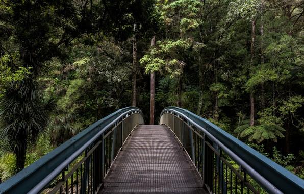Картинка зелень, лес, лето, деревья, мост, природа