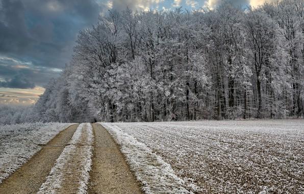 Картинка зима, дорога, лес, мороз