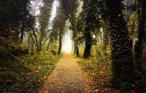 Картинка парк, листва, дорожка, digital painting